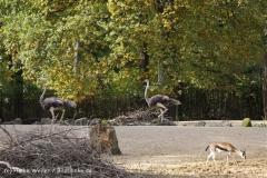 Zoo_Hannover_191012_IMG_0_9978