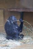 Zoo_Hannover_220116_IMG_2902