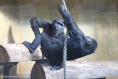 Zoo_Hannover_220116_IMG_2903