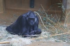 Zoo_Hannover_220116_IMG_2936