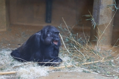 Zoo_Hannover_220116_IMG_2951