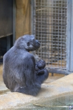 Zoo_Hannover_220116_IMG_2962