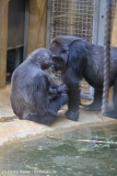 Zoo_Hannover_220116_IMG_2970