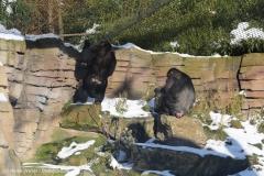 Zoo_Hannover_220116_IMG_2979