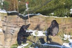 Zoo_Hannover_220116_IMG_2983