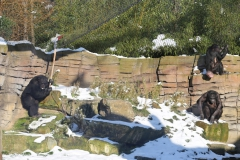 Zoo_Hannover_220116_IMG_2986
