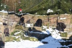 Zoo_Hannover_220116_IMG_2996