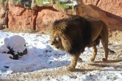Zoo_Hannover_220116_IMG_3003