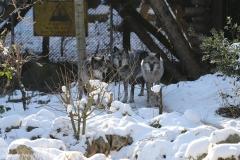 Zoo_Hannover_220116_IMG_3006