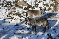 Zoo_Hannover_220116_IMG_3015