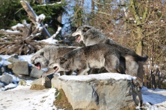 Zoo_Hannover_220116_IMG_3029