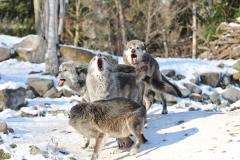 Zoo_Hannover_220116_IMG_3043