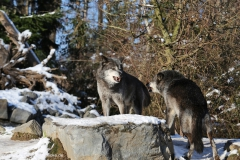 Zoo_Hannover_220116_IMG_3049