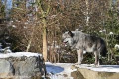 Zoo_Hannover_220116_IMG_3063