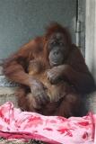 Zoo_Hannover_230813_IMG_4049