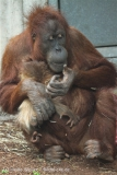 Zoo_Hannover_230813_IMG_4055
