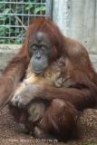 Zoo_Hannover_230813_IMG_4066