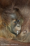 Zoo_Hannover_230813_IMG_4090