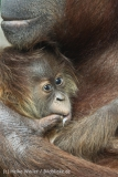Zoo_Hannover_230813_IMG_4094