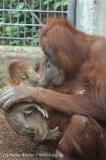Zoo_Hannover_230813_IMG_4105