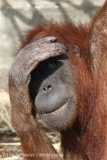 Zoo_Hannover_230813_IMG_4123