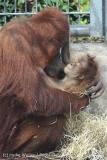 Zoo_Hannover_230813_IMG_4131