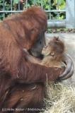 Zoo_Hannover_230813_IMG_4132