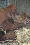 Zoo_Hannover_230813_IMG_4155