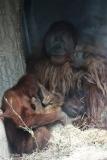 Zoo_Hannover_230813_IMG_4166