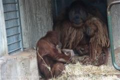 Zoo_Hannover_230813_IMG_4176