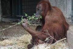 Zoo_Hannover_230813_IMG_4201