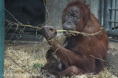 Zoo_Hannover_230813_IMG_4218