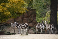 Zoo Hannover 231010- IMG100_9407