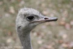 Zoo Hannover 231010- IMG100_9414