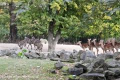 Zoo Hannover 231010- IMG100_9416