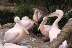 Zoo Hannover 231010- IMG100_9451