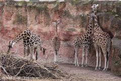 Zoo Hannover 231010- IMG100_9474