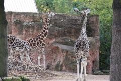 Zoo Hannover 231010- IMG100_9482