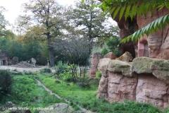 Zoo Hannover 231010- IMG100_9487