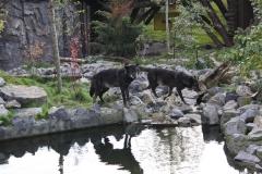 Zoo Hannover 231010- IMG100_9489