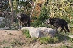Zoo Hannover 231010- IMG100_9529