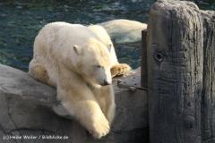 Zoo Hannover 231010- IMG100_9668