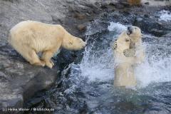 Zoo Hannover 231010- IMG100_9991