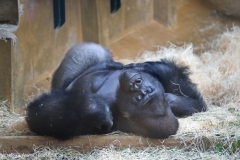 Zoo_Hannover_231215_IMG_2443