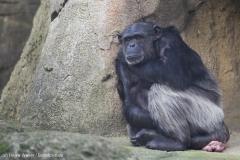 Zoo_Hannover_231215_IMG_2547