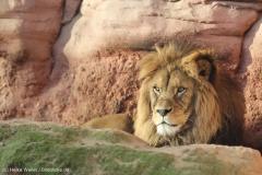 Zoo_Hannover_231215_IMG_2558