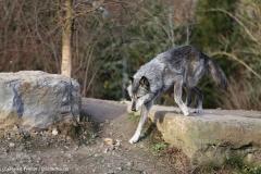 Zoo_Hannover_231215_IMG_2565