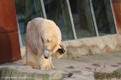 Zoo_Hannover_231215_IMG_2595