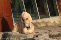 Zoo_Hannover_231215_IMG_2603