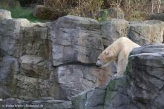 Zoo_Hannover_231215_IMG_2613